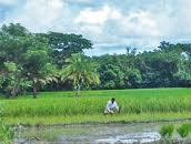 Odisha Government to provide input subsidy to farmers
