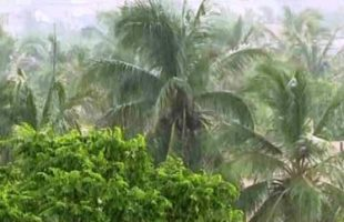 Compensation for Odisha's cyclone-hit farmers after assessment reports