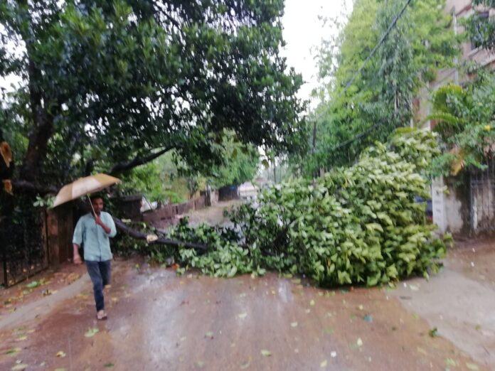Odisha: Cyclone Fani claims six lives across the state